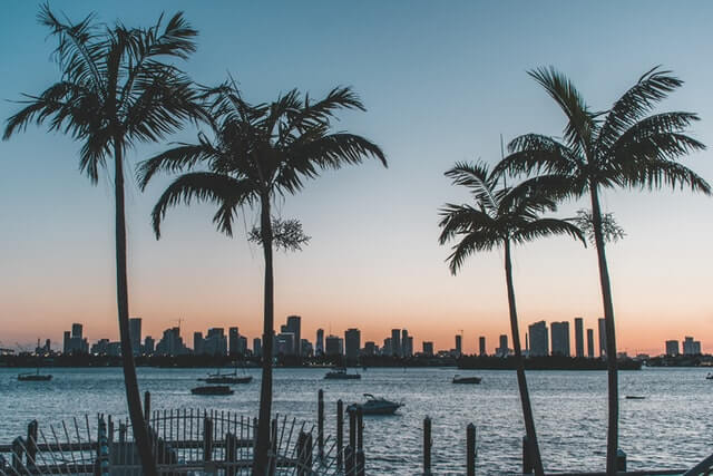 Palm trees in South Florida overlooking the city.